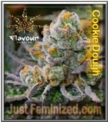 Cookie Dough - Trusted Original Marijuana Seeds - by Flavour Chasers